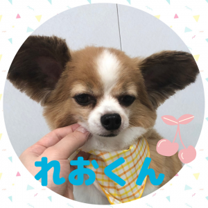 ★れおくん★